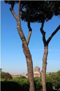 Vista di Roma dal Forum Austriaco di Cultura